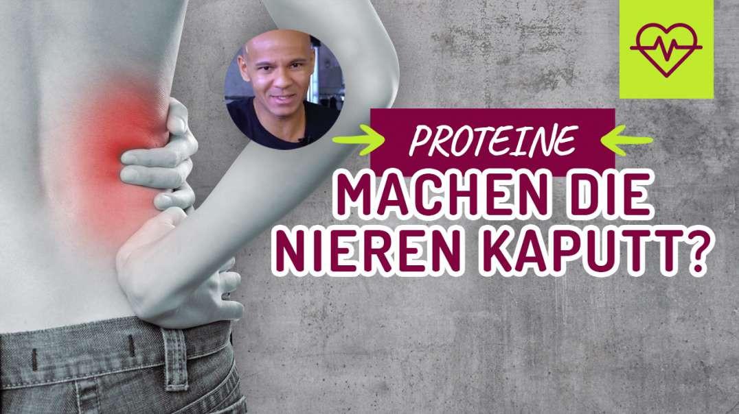 Proteine machen die Nieren kaputt ?